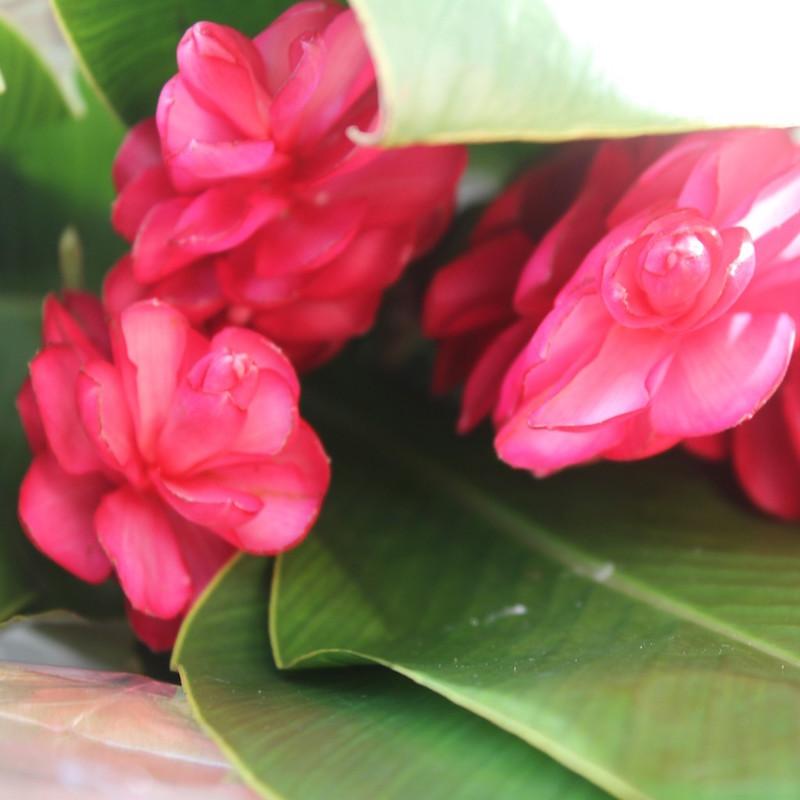 Flowers in Dubai