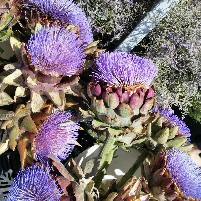 Caspia flowers Shutters