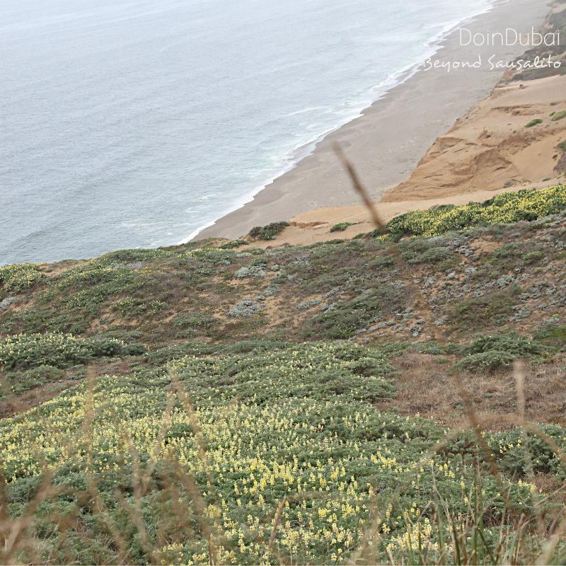 Inverness San Fran Visit California
