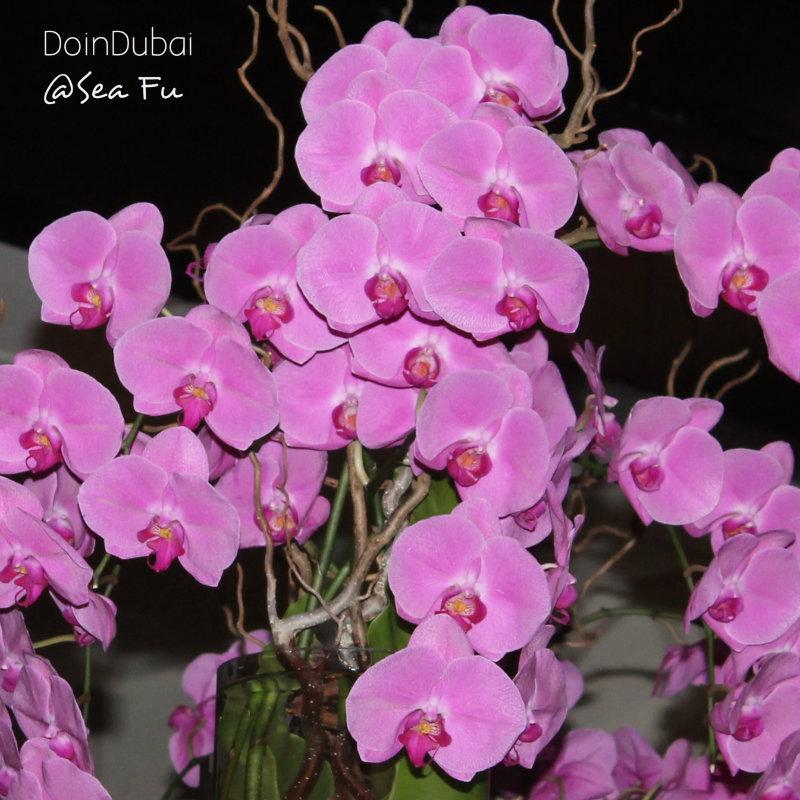 Sea Fu Orchids large