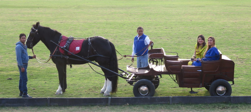 Dubai wedding DoinDubai horse and cart gallery