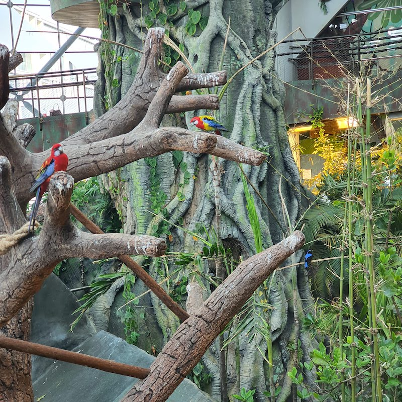 Parrots at the Green Planet Dubai yoga class there as part of money saving deals
